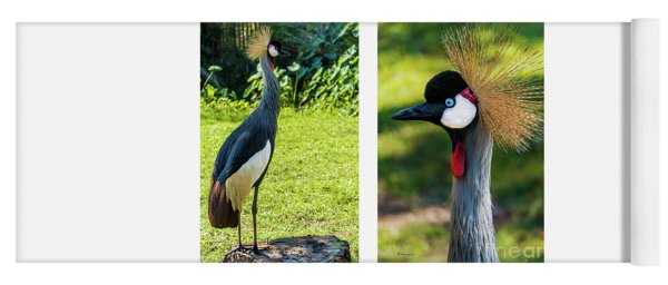 Grey Crowned Crane Gulf Shores Al Collage 10 Diptych Yoga Mat