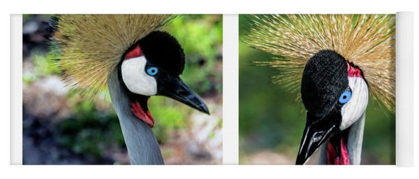 Grey Crowned Crane Gulf Shores Al Collage 3 Diptych Yoga Mat