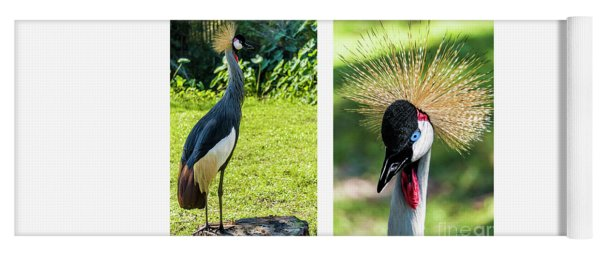 Grey Crowned Crane Gulf Shores Al Collage 8 Diptych Yoga Mat