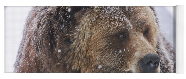 Grizzly Bear Yoga Mat