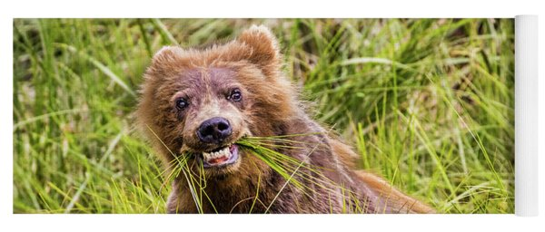 Grizzly Cub Grazing, Alaska Yoga Mat