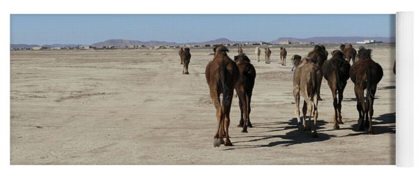 Herd Of Camels Crossing The Highway Near  Rissani Yoga Mat