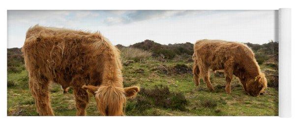 Highland Cattle Feeding At Baslow Edge Yoga Mat