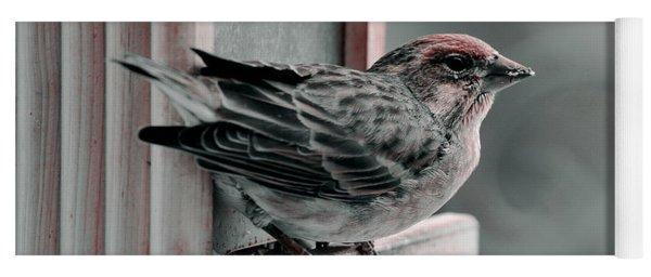 House Finch On Feeder Yoga Mat