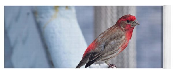 House Finch On The U.s.s. Wisconsin Yoga Mat