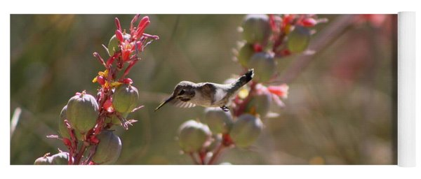 Hummingbird Flying To Red Yucca 1 In 3 Yoga Mat
