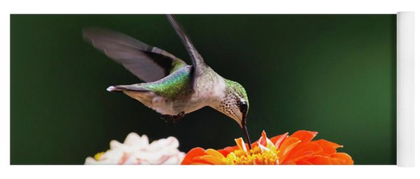 Hummingbird In Flight With Orange Zinnia Flower Yoga Mat