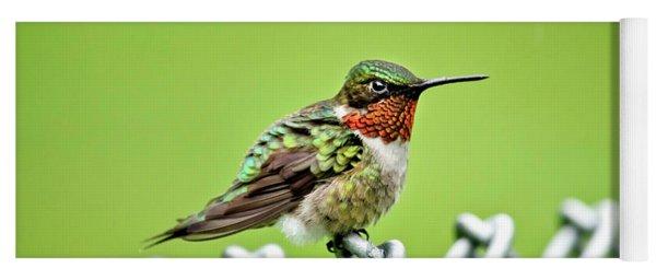 Hummingbird On A Fence Yoga Mat