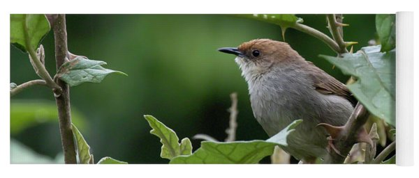Hunter's Cisticola Yoga Mat