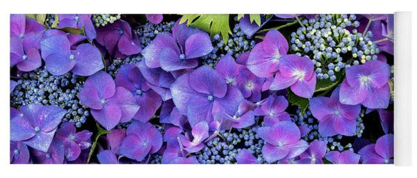 Yoga Mat featuring the photograph Hydrangea Macrophylla Kardinal Violet by Tim Gainey