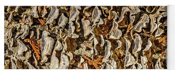 Turkey Tailed Bracket Fungi Yoga Mat