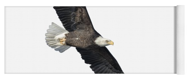 Isolated Bald Eagle 2018-2 Yoga Mat