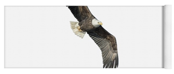 Isolated Bald Eagle 2018-4 Yoga Mat