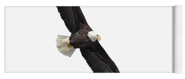 Isolated Bald Eagle 2019-1 Yoga Mat