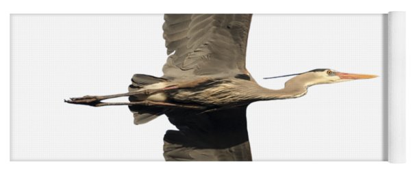 Isolated Great Blue Heron 2018-1 Yoga Mat