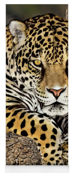 Jaguar Portrait Wildlife Rescue Yoga Mat