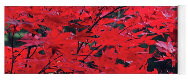 Yoga Mat featuring the photograph Japanese Maple In The Fall by Trina Ansel