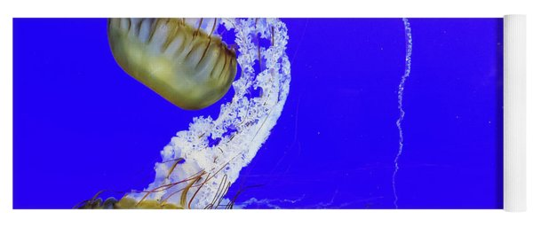 Yoga Mat featuring the photograph Jellys by Bob Cournoyer