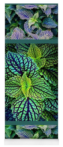 Yoga Mat featuring the photograph Coleus Triptych Panel by Jessica Jenney