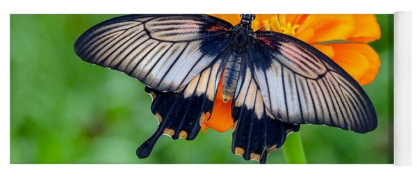 Kite Swallowtail  Yoga Mat