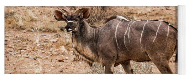 Kudu In The Kalahari Desert, Namibia Yoga Mat