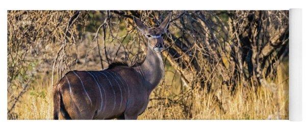 Kudu, Namibia Yoga Mat