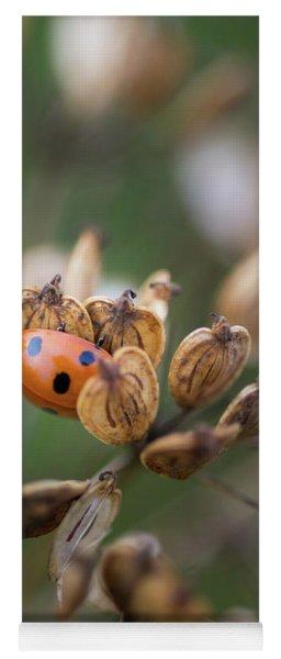 Lady Bird / Lady Bug In Flower Seed Head Yoga Mat