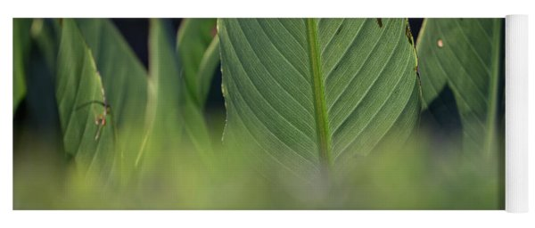 Large Dark Green Leaves Yoga Mat