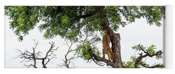 Leopard Descending A Tree Yoga Mat