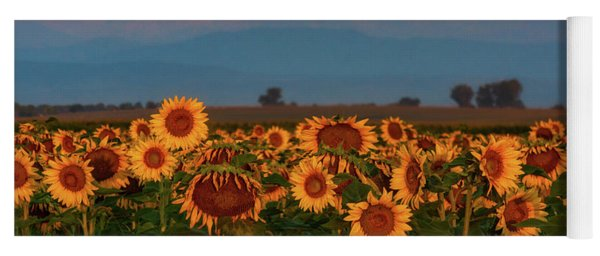 Yoga Mat featuring the photograph Light Of The Sunflowers by John De Bord