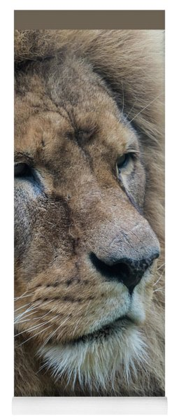 Yoga Mat featuring the photograph Lion by Anjo Ten Kate
