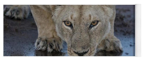 Lioness Drinking Yoga Mat