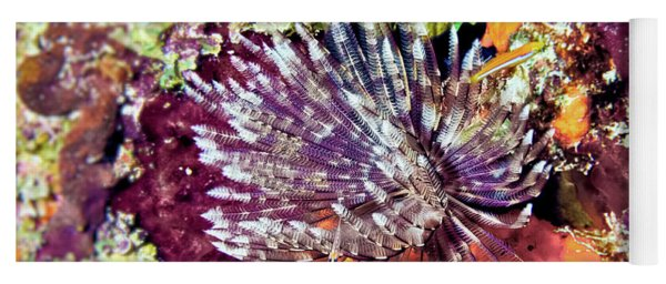 Magnificent Feather Duster Yoga Mat