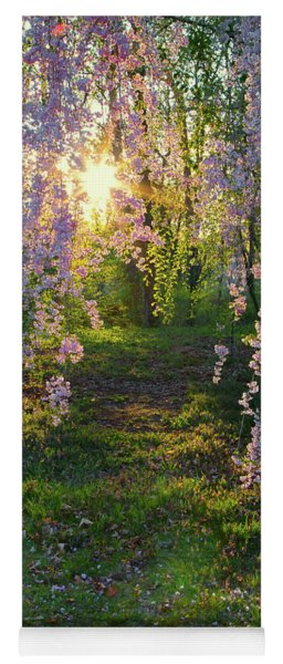 Magnolia Tree Sunset Yoga Mat