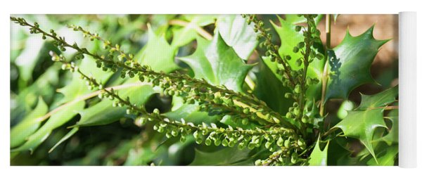 Mahonia Buds And Leaves Yoga Mat