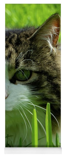 Maine Coon Cat Photo A111018 Yoga Mat
