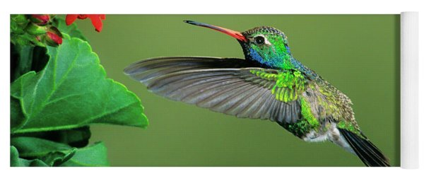 Male Broad-billed Hummingbird At Red Flower Yoga Mat