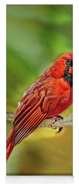 Male Cardinal Headshot  Yoga Mat