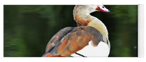Male Egyptian Goose Yoga Mat