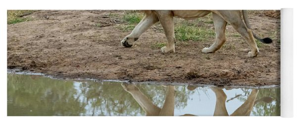 Male Lion And His Reflection Yoga Mat