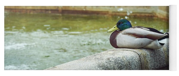 Mallard Resting On The Fountain Of The Fallen Angel In The Retiro Park - Madrid, Spain Yoga Mat