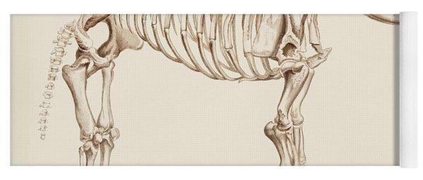 Mamoth  Mammut  Illustrated By Charles Dessalines D' Orbigny  1806-1876  Yoga Mat