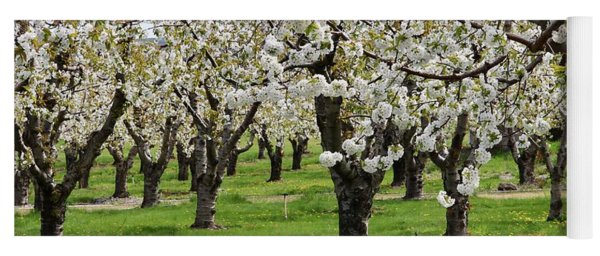 Many Cherry Blossoms In Spring Orchard Yoga Mat