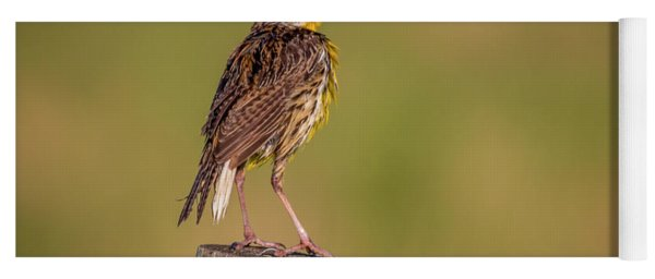 Yoga Mat featuring the photograph Meadowlark On Post by Tom Claud