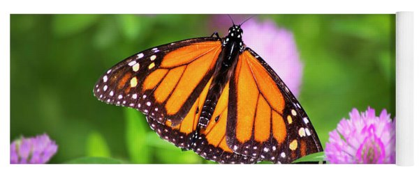 Monarch Butterfly On Bright Pink Clover Flowers Yoga Mat