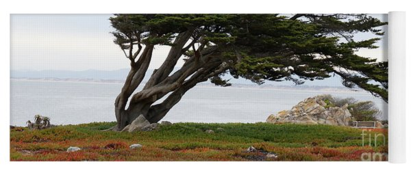 Yoga Mat featuring the photograph Monterey Colors by Eye4Nature