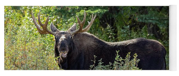 Moose Chew Yoga Mat