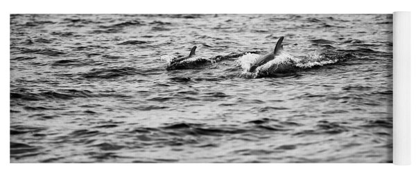 Mother Dolphin And Calf Swimming In Moreton Bay. Black And White Yoga Mat