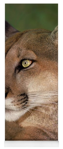 Mountain Lion Portrait Wildlife Rescue Yoga Mat