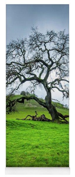 Mt Diablo Oak Tree Yoga Mat